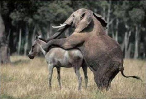 Elephant v donkey.jpg?ixlib=rails 1.1