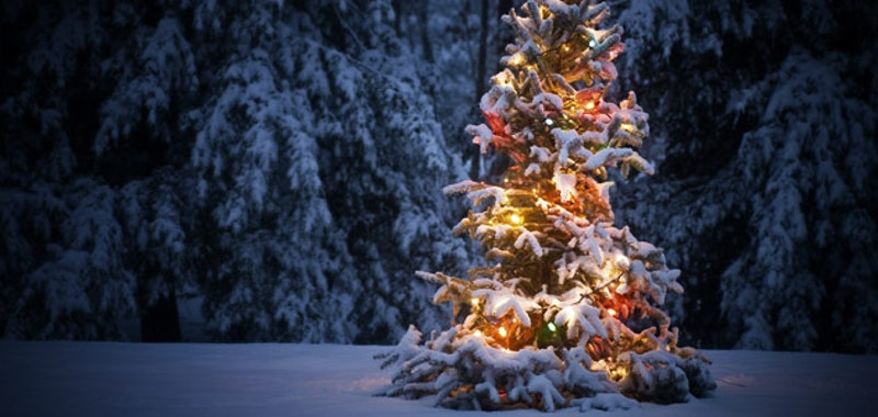 Christmastree 631 2.jpg?ixlib=rails 2.1