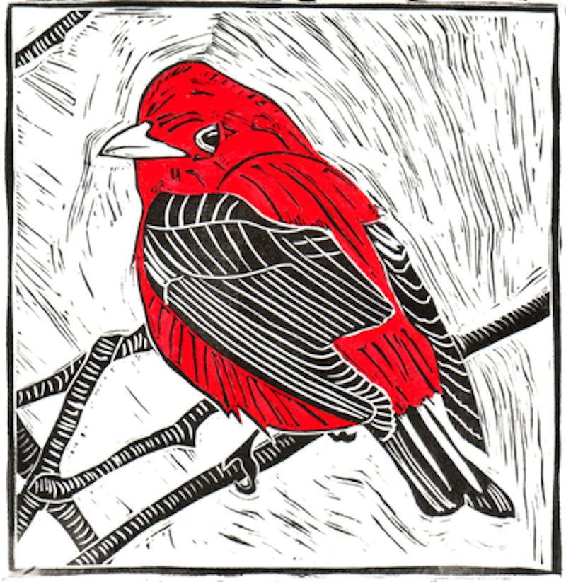 Rsz 1scarlet tanager.png?ixlib=rails 2.1