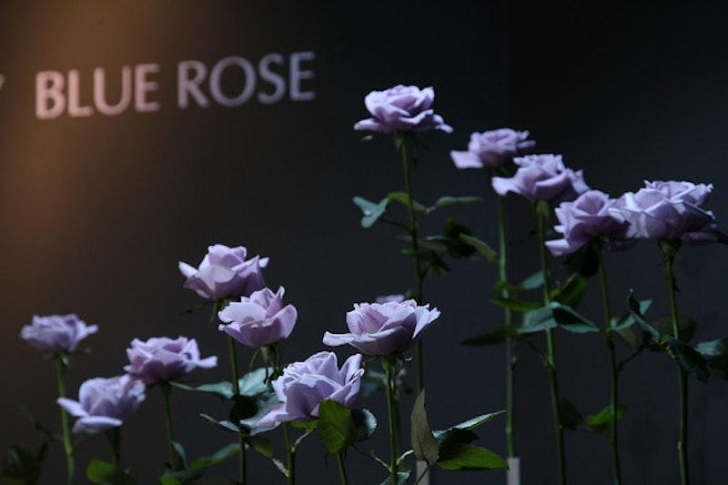 Tokyo hosts annual flower expo  7djj7usi nl.jpg?ixlib=rails 2.1