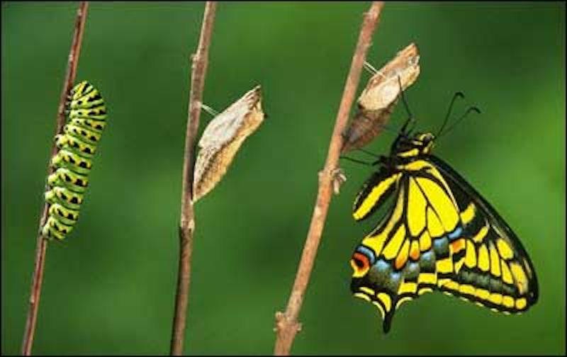 Butterfly.jpg?ixlib=rails 2.1