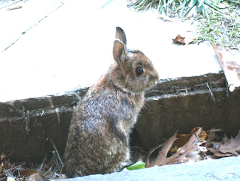 Rsz rabbit.png?ixlib=rails 2.1