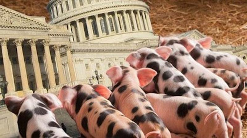 Rsz 04062012 piglets capitol article.jpg?ixlib=rails 2.1