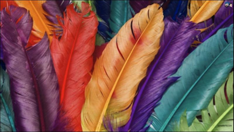 Rsz feathers.png?ixlib=rails 2.1