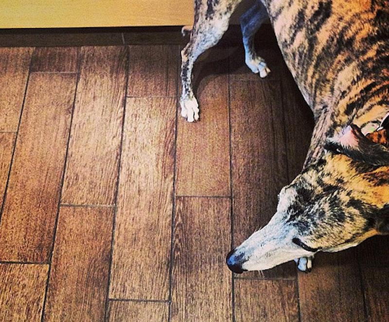 Greyhound1.jpg?ixlib=rails 2.1