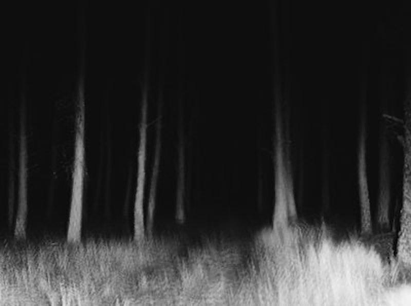 Rsz trees 16.jpg?ixlib=rails 2.1