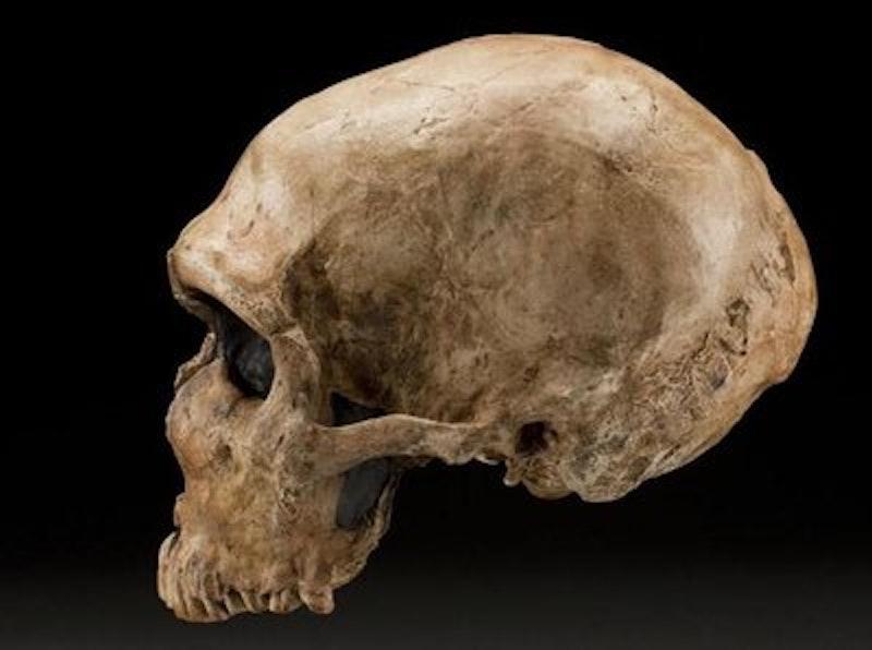 Rsz neanderthal skull laferrassie1 s jddh l.jpg?ixlib=rails 2.1