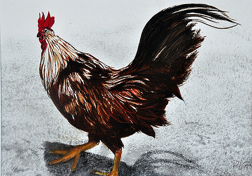 Rooster from aruba rudy martin.jpg?ixlib=rails 1.1