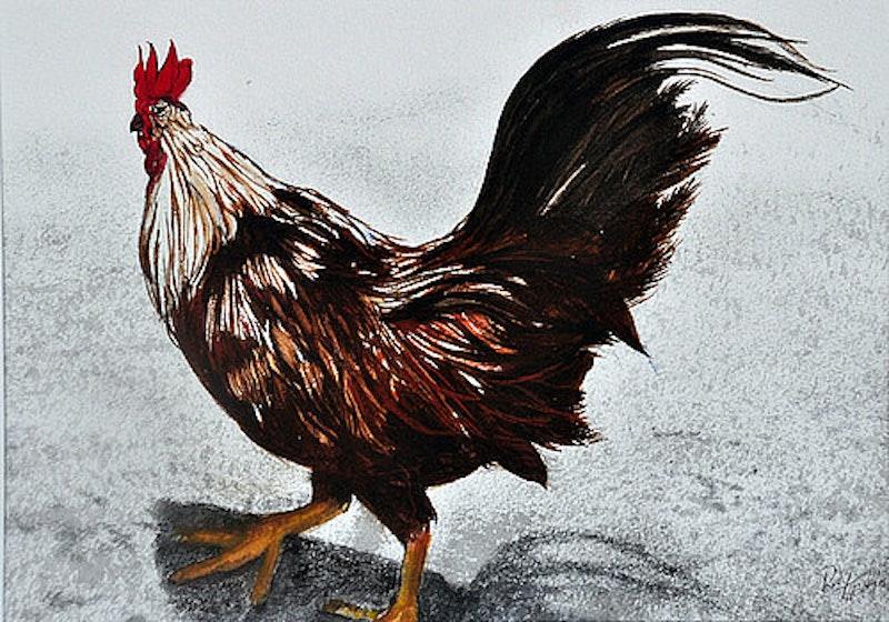 Rooster from aruba rudy martin.jpg?ixlib=rails 2.1