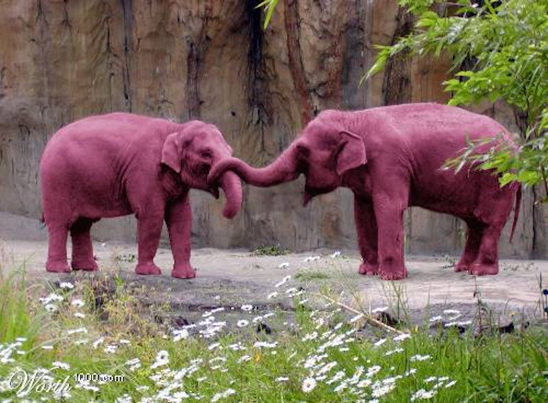 1pink elephants.jpg?ixlib=rails 2.1