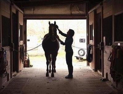 Rsz horse grooming resized.jpg?ixlib=rails 2.1