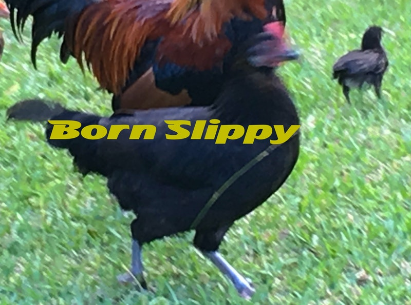 Born slippy.jpg?ixlib=rails 2.1