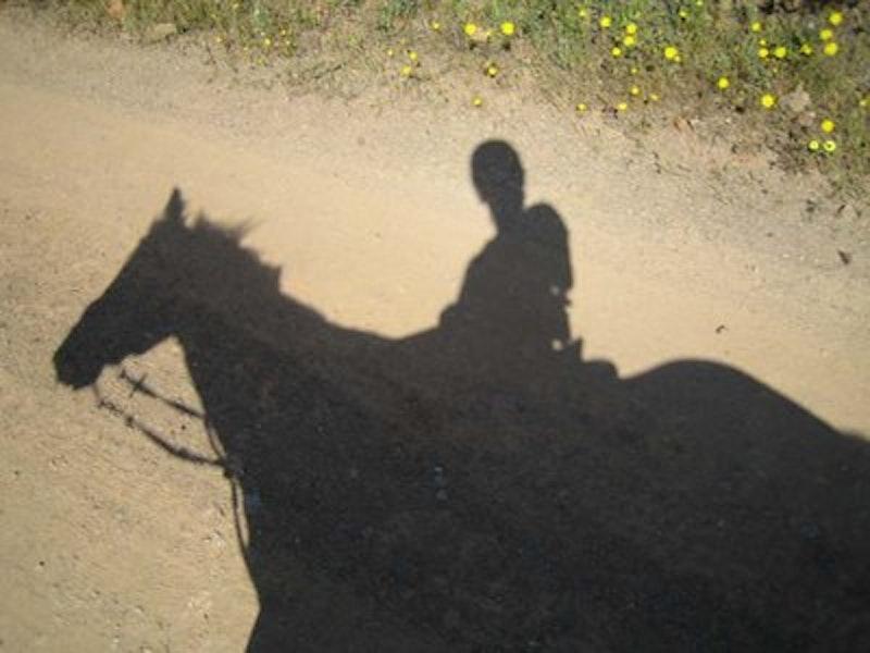 Rsz horse rider shadow.jpg?ixlib=rails 2.1