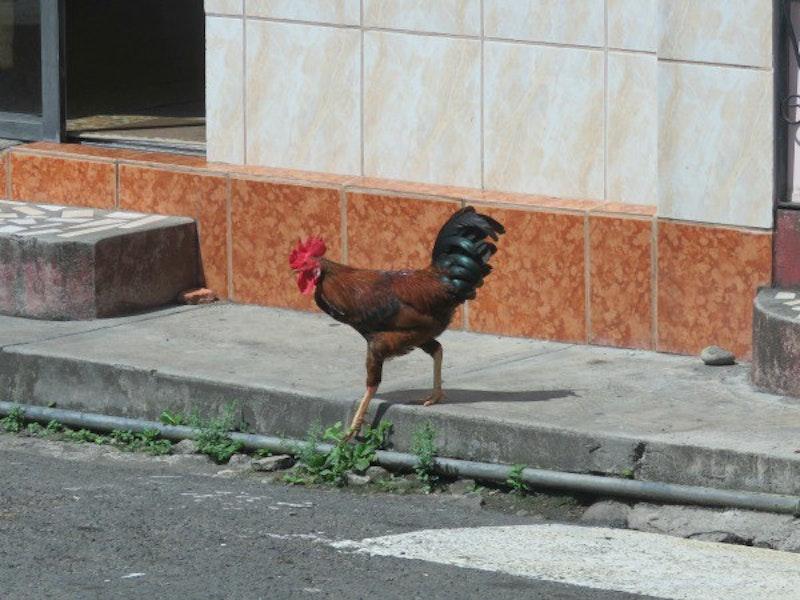 Grenada 12.jpg?ixlib=rails 2.1
