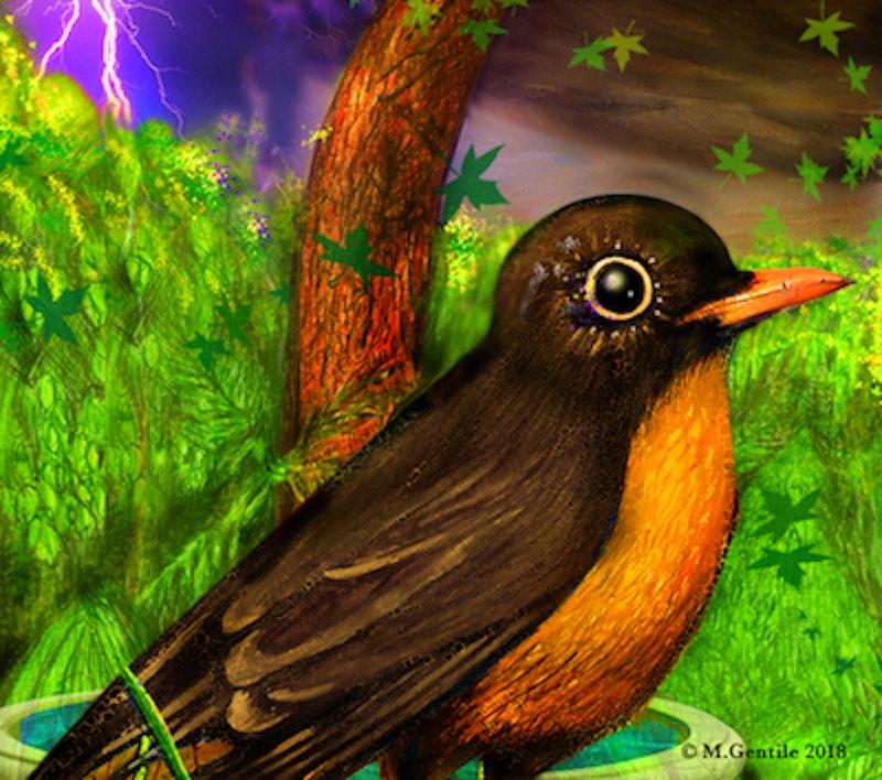 Robin.jpg?ixlib=rails 2.1