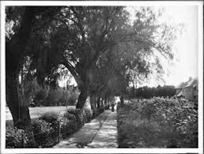 Trees old oliver.jpeg?ixlib=rails 2.1