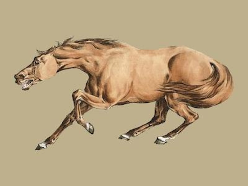 Illustration of light brown horse from sporting sketches 1817 1818 by henry alken 1784 1851 digitally enhanced by rawpixel vector.jpg?ixlib=rails 2.1