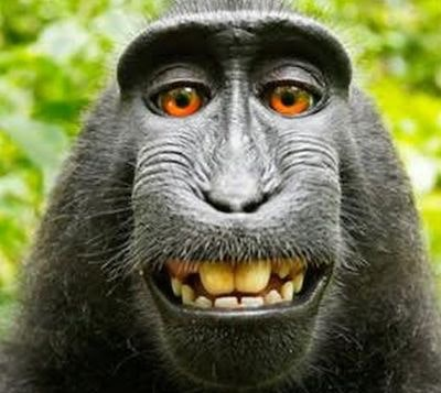 Monkey2.jpeg?ixlib=rails 2.1