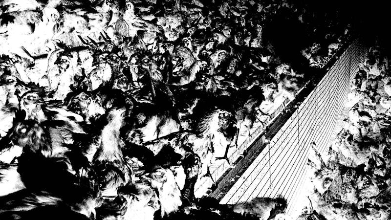 Covid and slaughterhouses blog.jpg?ixlib=rails 2.1