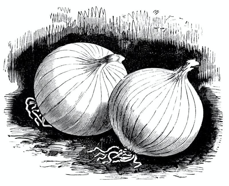 Olddesignshop onionsqueen.jpg?ixlib=rails 2.1