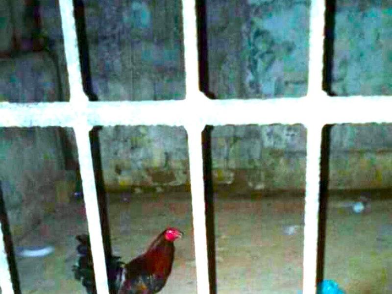 Pay cen roosterprison 01.jpg?ixlib=rails 2.1