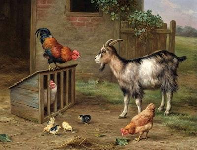 Goats rooster chickens ebay.jpg?ixlib=rails 2.1