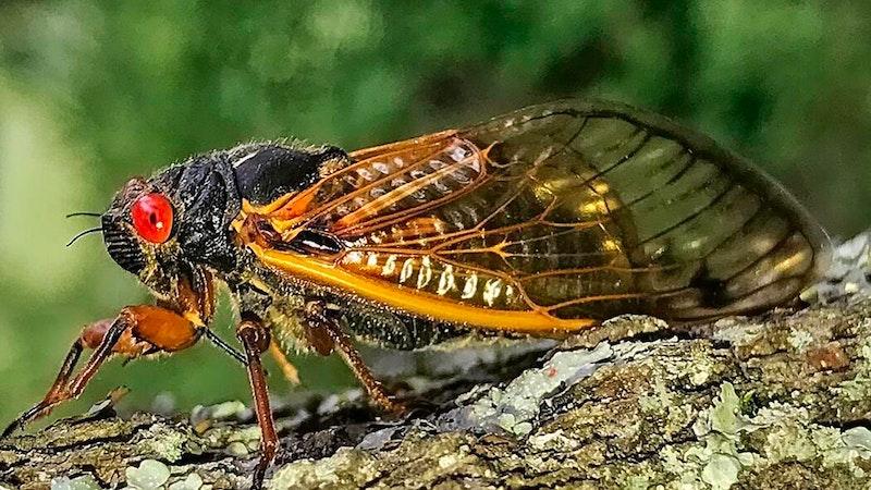 Msj cicada adult profile.jpg?ixlib=rails 2.1