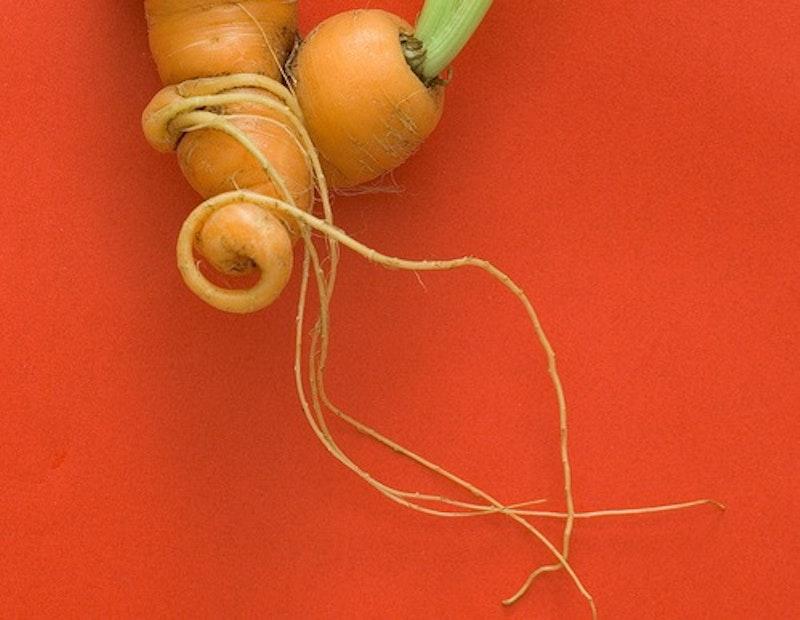 Carrot.jpg?ixlib=rails 2.1