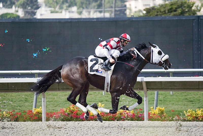 Horse.jpg?ixlib=rails 2.1