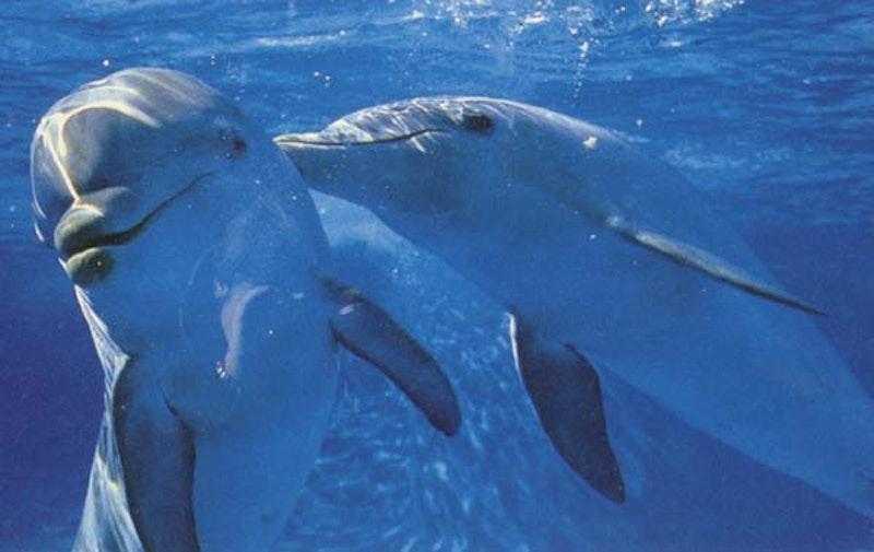 Dolphin.jpg?ixlib=rails 2.1