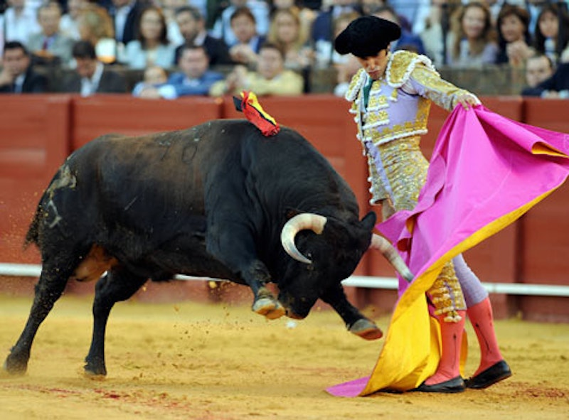 The bullfighting.jpeg?ixlib=rails 2.1