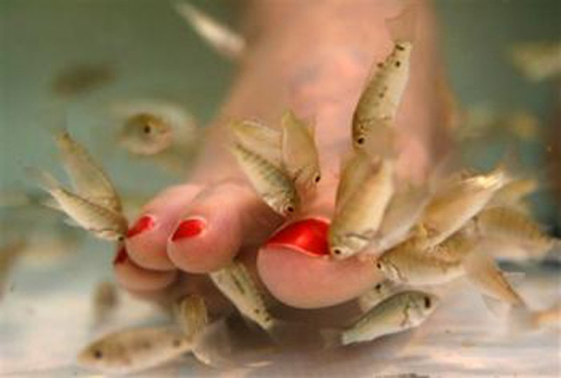 Carp fish pedicure.jpg?ixlib=rails 2.1
