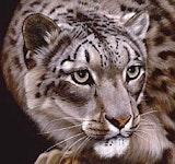 Snowleopard boost.jpg?ixlib=rails 2.1