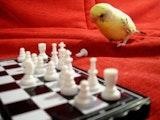 Pensive parakeet.jpg?ixlib=rails 2.1
